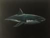 ARMANDO PEREZ - Great White Shark Painting