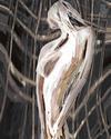 JOHAN VAN DREVEN - Shredded